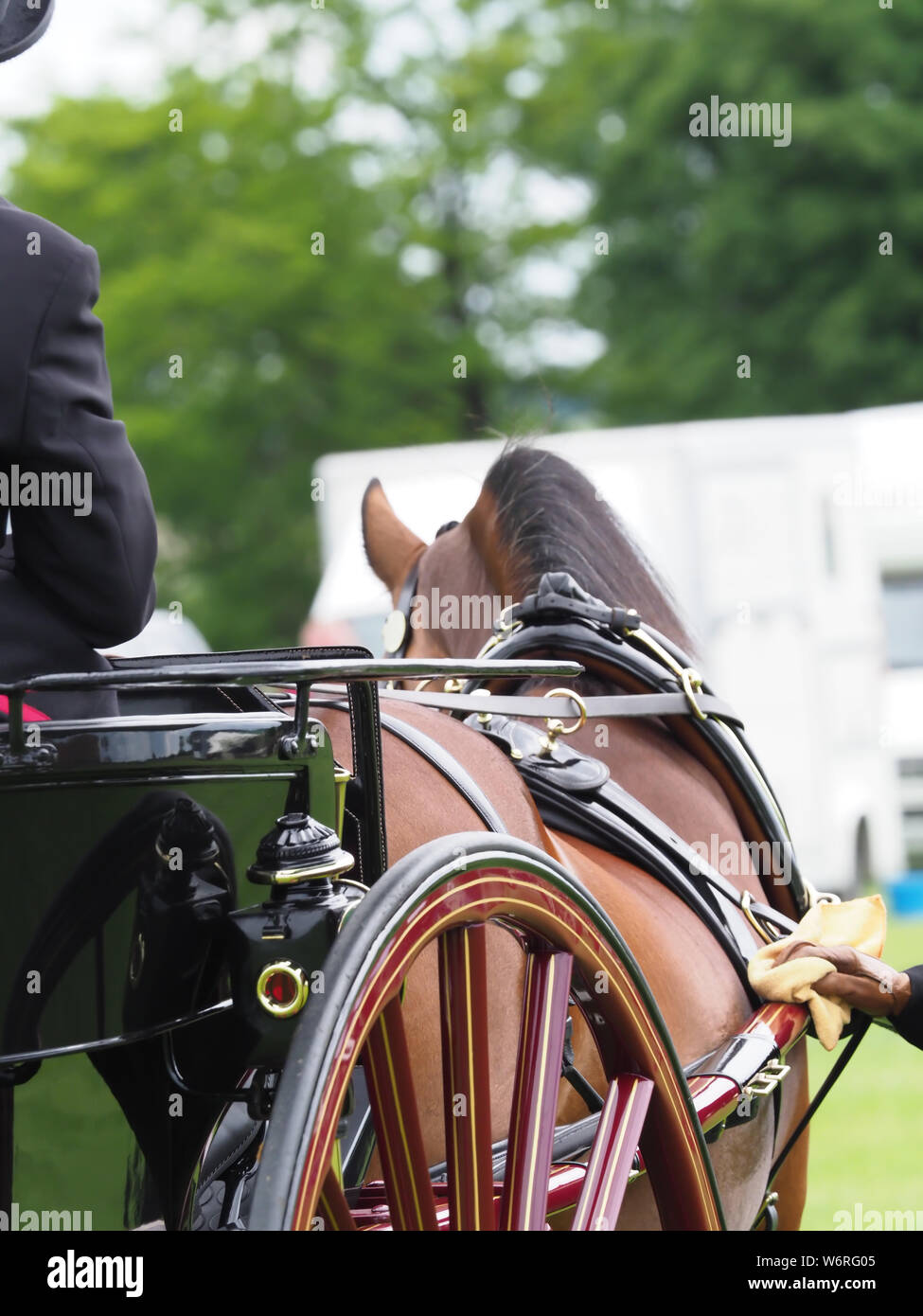 An abstract shot of a bay Welsh Cob in full driving harness. Stock Photo
