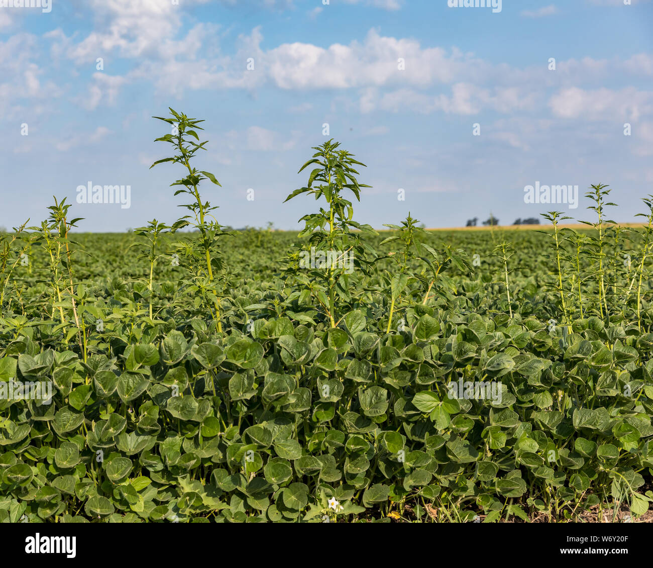 Weedy Field High Resolution Stock Photography and Images - Alamy