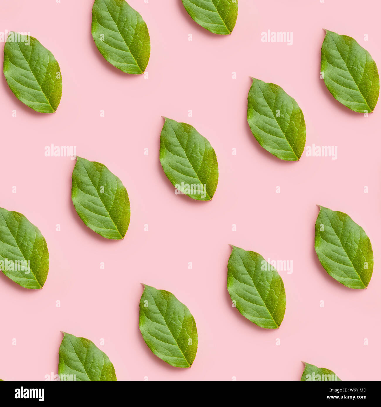 fresh green leaves pattern on a pink background, creative flat lay for design Stock Photo