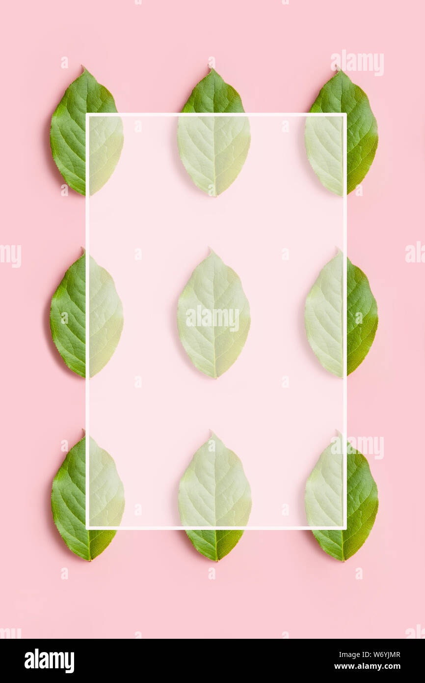 creative natural pattern from leaves with white frame on pink background Stock Photo