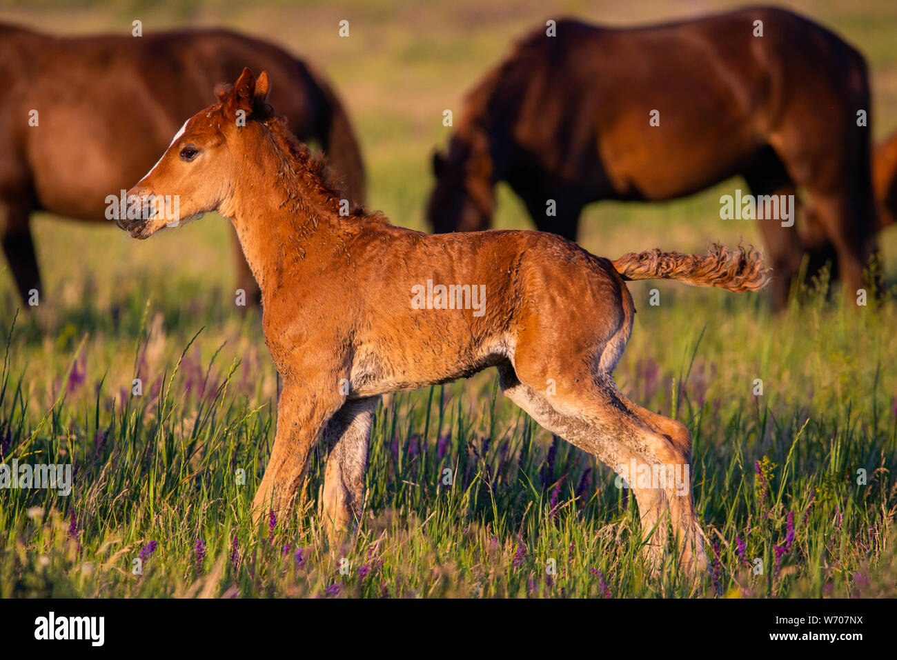 Young wild pretty foal on green meadow. Stock Photo