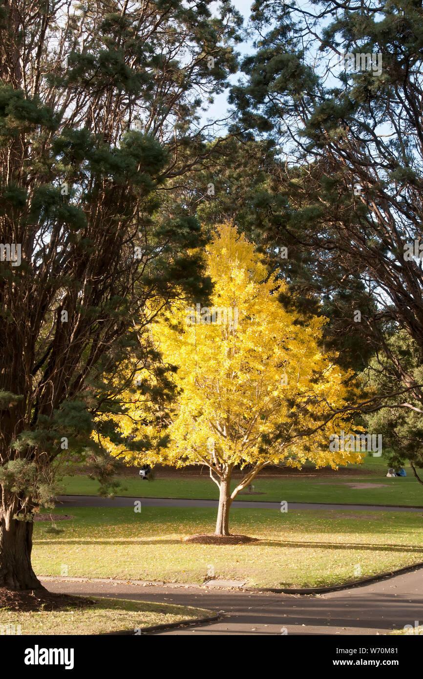 Sydney Australia Landscaped Park View With Autumn Tones Of A