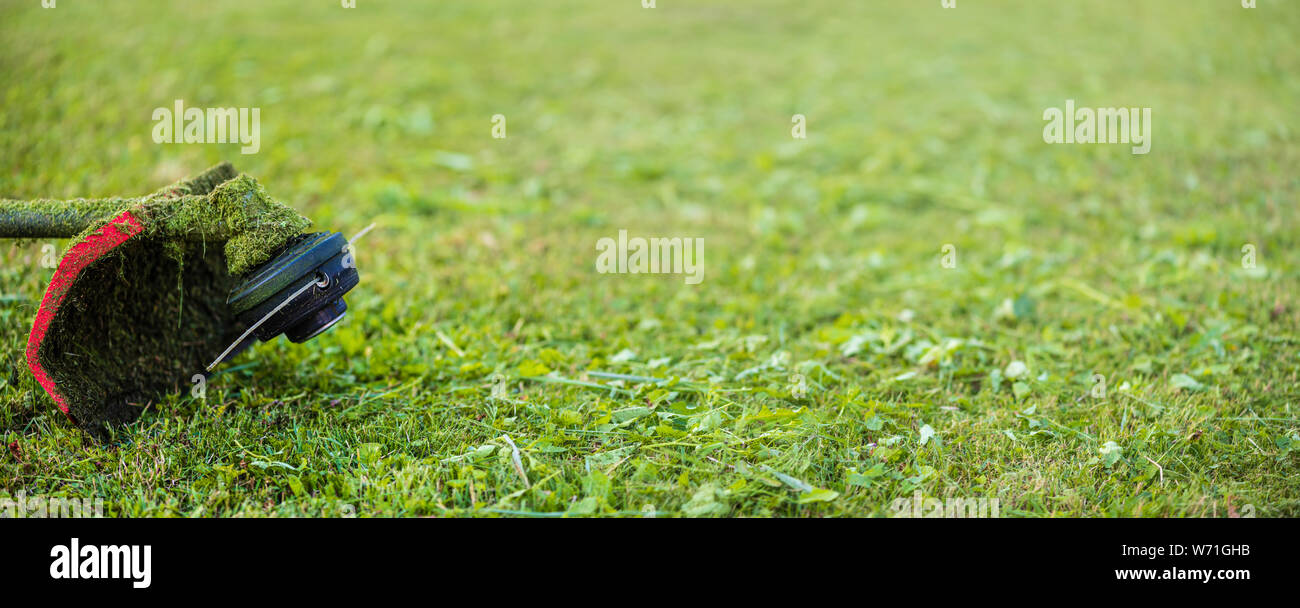 String trimmer on mown grass. Banner format background with copy space. Theme of lawn care services, tool rental or repair Stock Photo