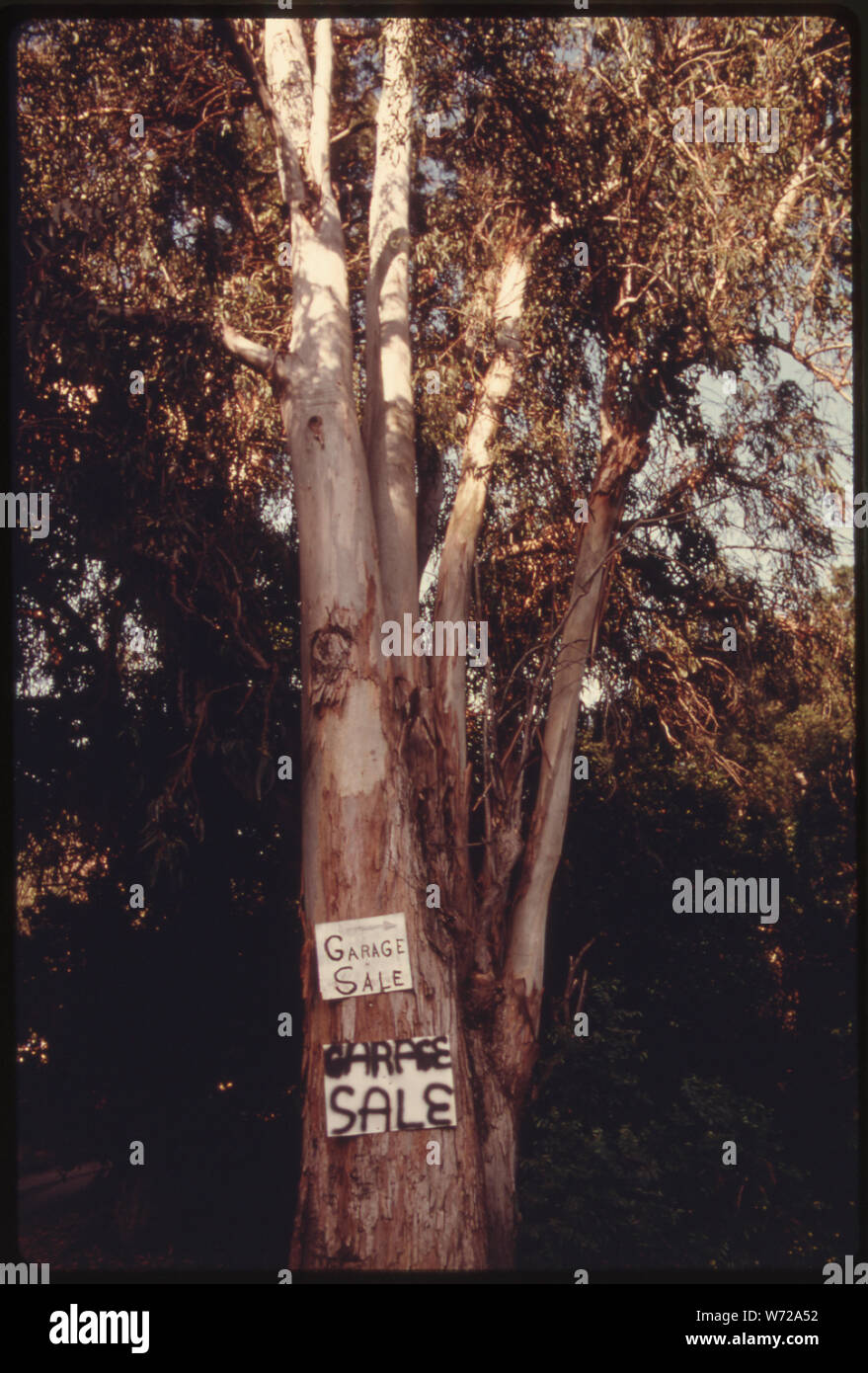 GARAGE SALE SIGN ATTACHED TO A TREE OFF MULHOLLAND DRIVE IN THE