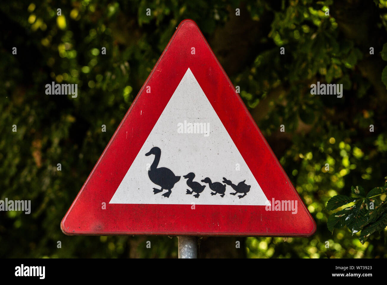 Traffic Sign For Protect Ducks And Biddys In A Parkway In The Netherlands Stock Photo 262531083 Alamy