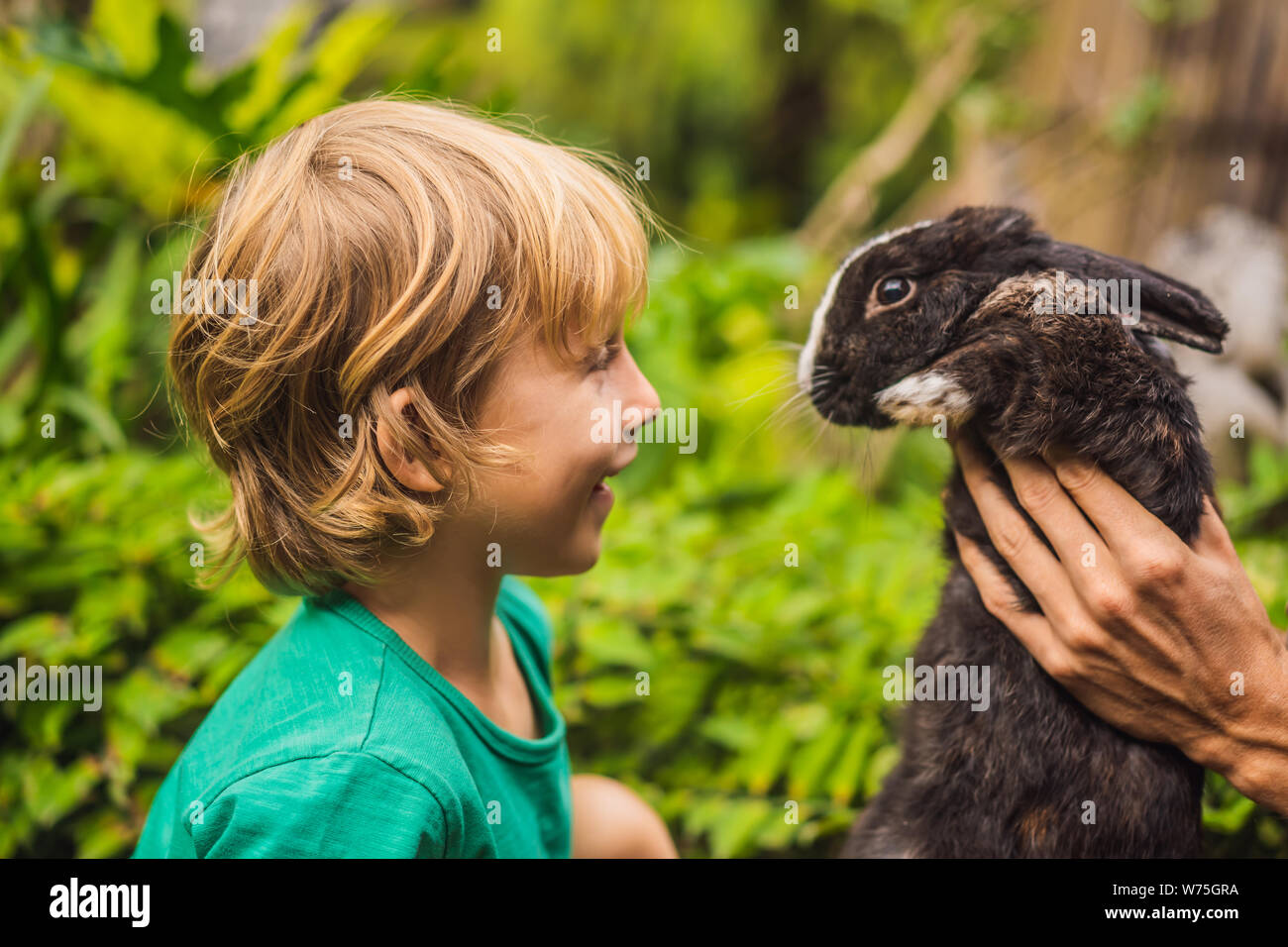 The boy feeds the rabbit. Cosmetics test on rabbit animal. Cruelty free and stop animal abuse concept Stock Photo