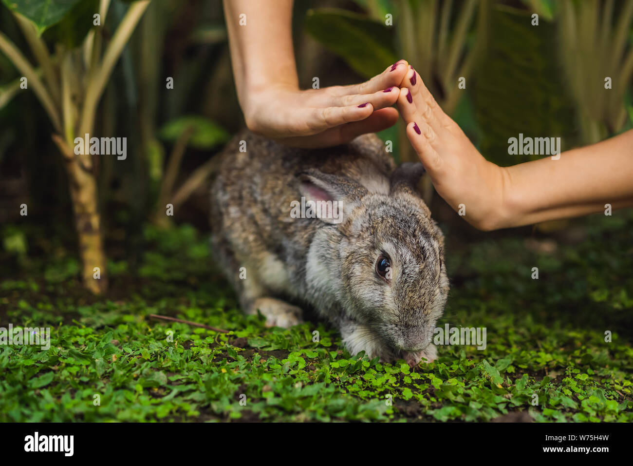Hands protect rabbit. Cosmetics test on rabbit animal. Cruelty free and stop animal abuse concept Stock Photo