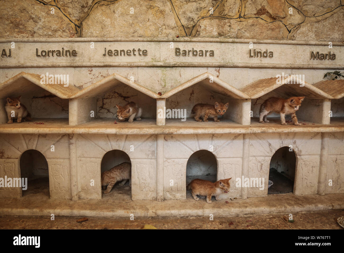03 August 2019, Syria, Aleppo: Cats are seen at the shelters of the Ernesto's Cat Sanctuary, runned by Mohammed Alaa al-Jaleel, also known as 'the cat man of Aleppo'. During the Syrian war in 2012, Al-Jaleel was working as an ambulance driver in Aleppo, he used to drop off food for stray and abandoned cats on his way home after work. In 2015, he started to search for living cats in the war devastated areas and take them home, later in the year his compassionate work with cats gone viral and with the help of an Italian cat lover called Alessandra Abidin, he started to raise funds and receive do Stock Photo