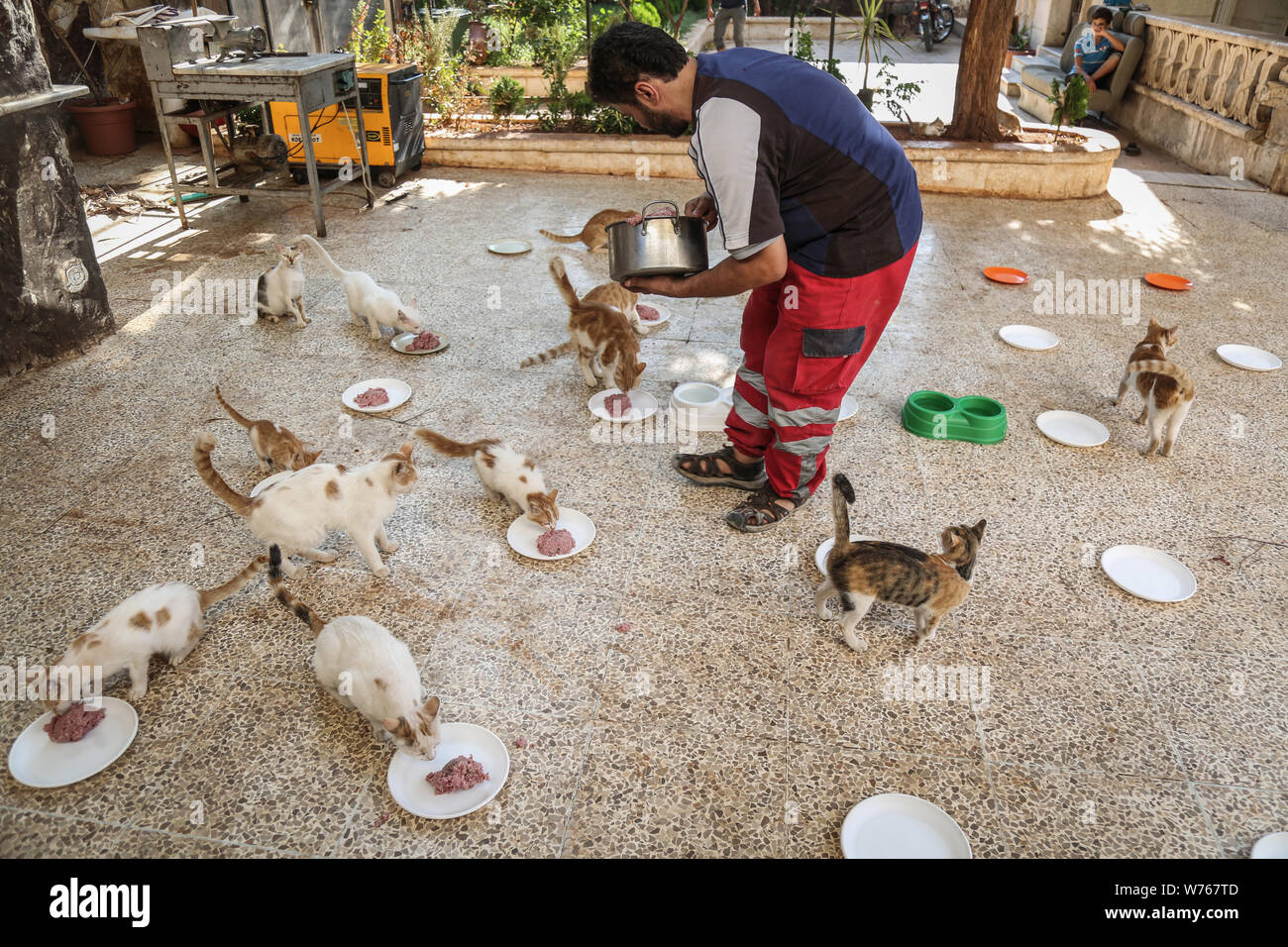 03 August 2019, Syria, Aleppo: Mohammed Alaa al-Jaleel, also known as 'the cat man of Aleppo' feeds cats at the Ernesto's Cat Sanctuary that he runs in Kafr Naya. During the Syrian war in 2012, Al-Jaleel was working as an ambulance driver in Aleppo, he used to drop off food for stray and abandoned cats on his way home after work. In 2015, he started to search for living cats in the war devastated areas and take them home, later in the year his compassionate work with cats gone viral and with the help of an Italian cat lover called Alessandra Abidin, he started to raise funds and receive donati Stock Photo