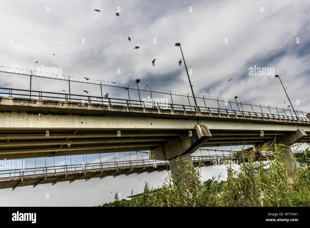 Birds circle the Roma-Ciudad Miguel Aleman International Bridge, which spans the Rio Grande and Mexico-U.S. border, is seen from Roma, Texas, USA Stock Photo