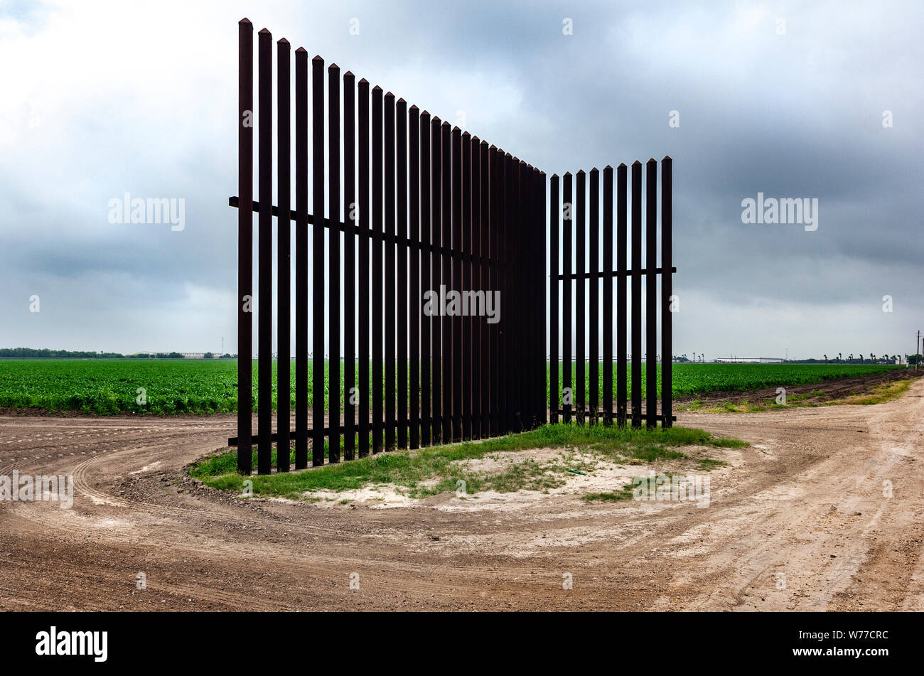 Young corn stalks grow in a field near a section of the border fence in Los Indios not far from the International bridge in Los Indios, TX, USA Stock Photo