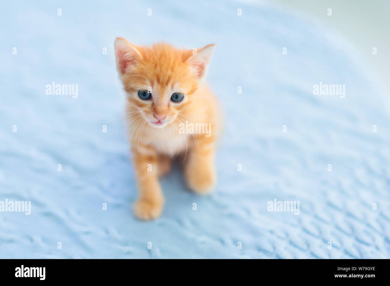 Baby Cat Ginger Kitten Playing On Couch With Knitted Blanket Domestic Animal Home Pet Young Cats Cute Funny Cats Play At Home Stock Photo Alamy