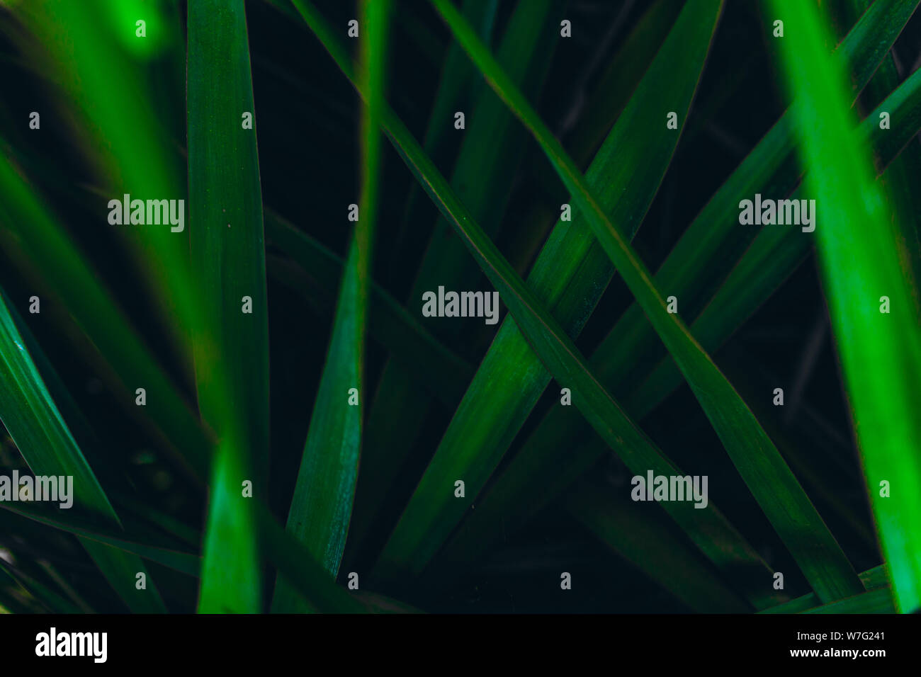 Creative layout made of green leaves. Green leaves pattern background. Stock Photo