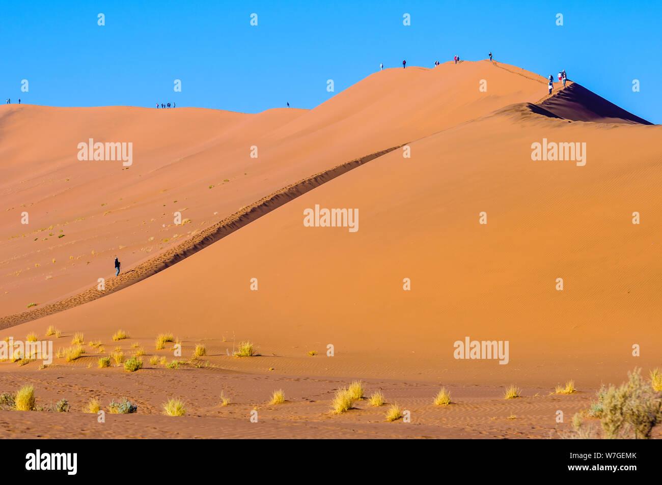 Camelthorn trees in Deadvlei, Sossusvlei, Namib Desert, Namibia Stock Photo