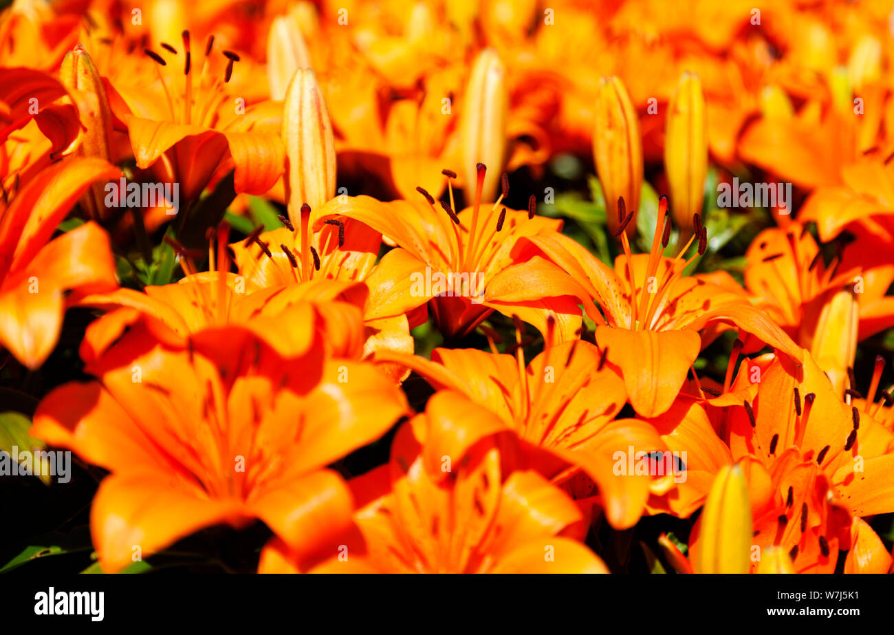 Yellow Flowers Desktop Wallpapers High Resolution Stock Photography And Images Alamy