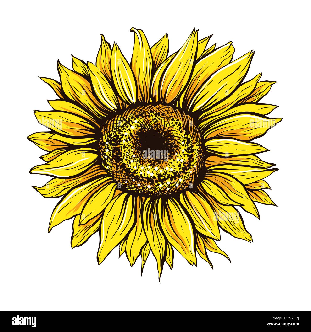 Cartoon Sunflower High Resolution Stock Photography and ...