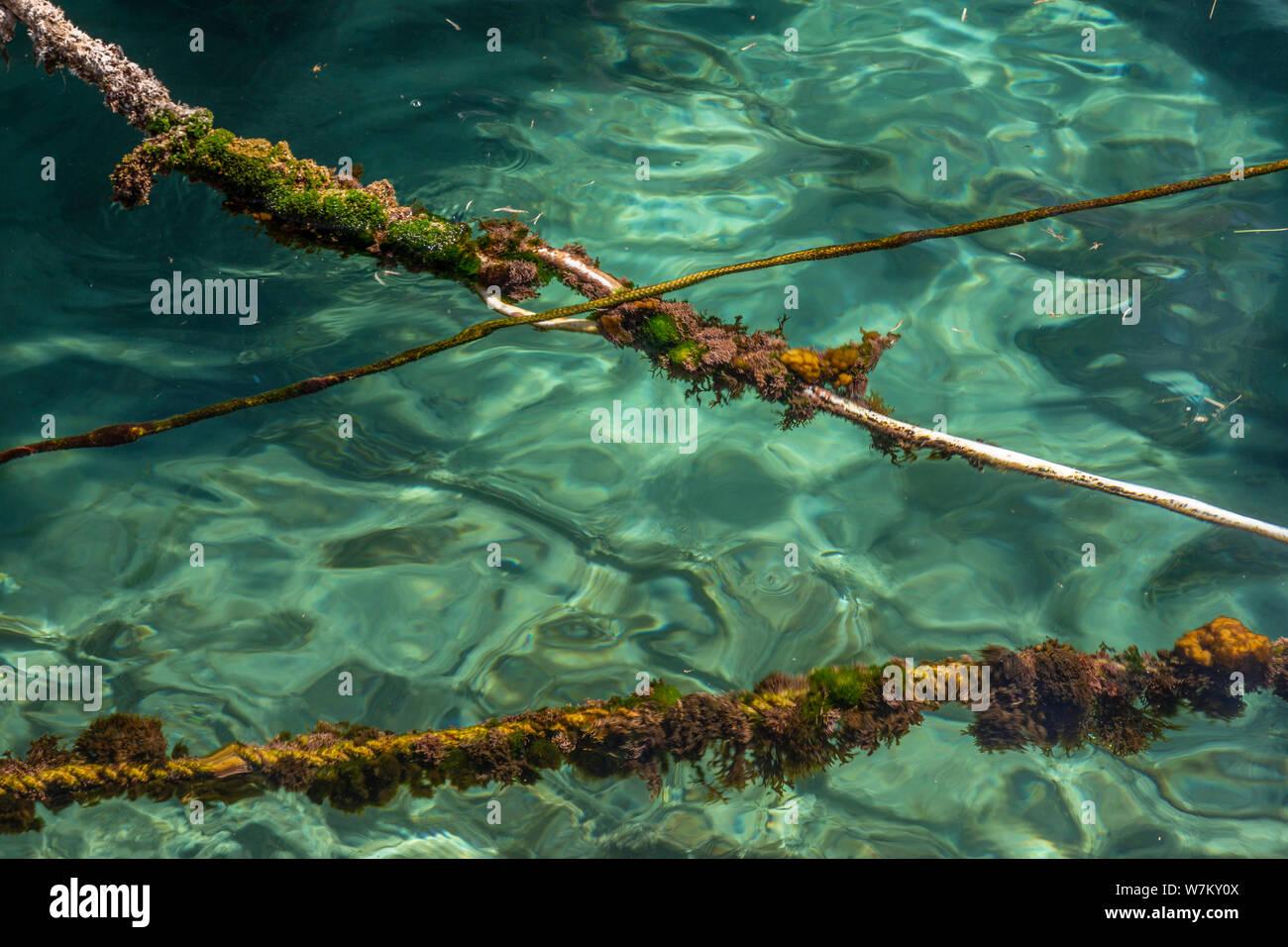 Seaweed covered ropes at Maslinica on the adriatic coast of Croatia Stock Photo