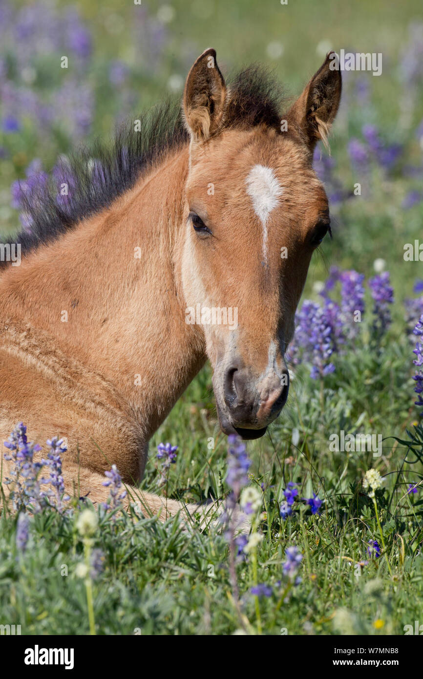 Baby Horse Cute Flowers High Resolution Stock Photography And Images Alamy