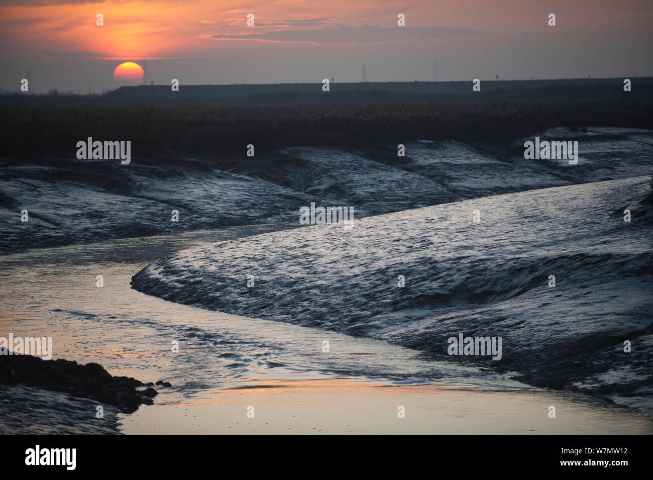 Landscape view of saltmarshes from West Canvey Marshes RSPB reserve, Canvey Island, Essex, England, UK, November. Stock Photo