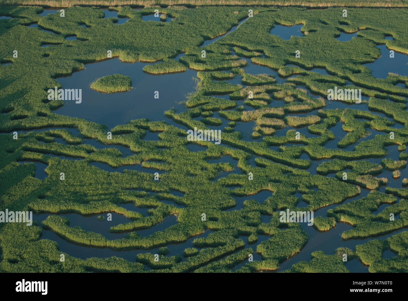 Aerial view of open reedbeds for hunting waterfowl, Camargue, Southern France, June 2007 Stock Photo