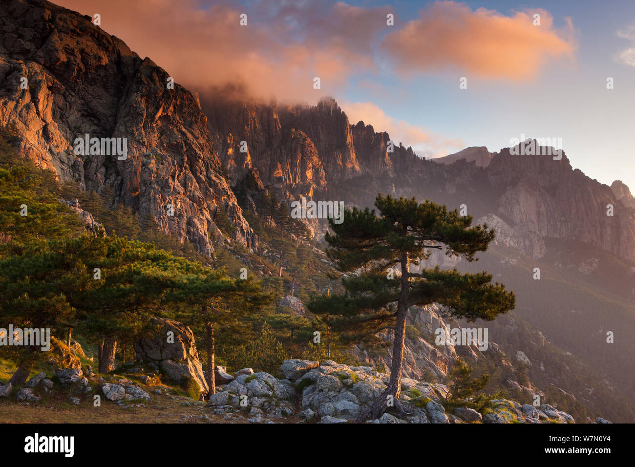 The Col de Bavella with Pine tree at dawn, Corsica, France. June 2011. Stock Photo