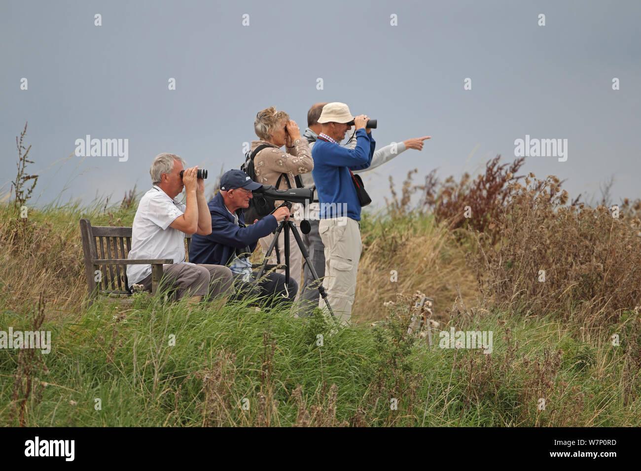 Birdwatching Uk Stock Photos & Birdwatching Uk Stock Images