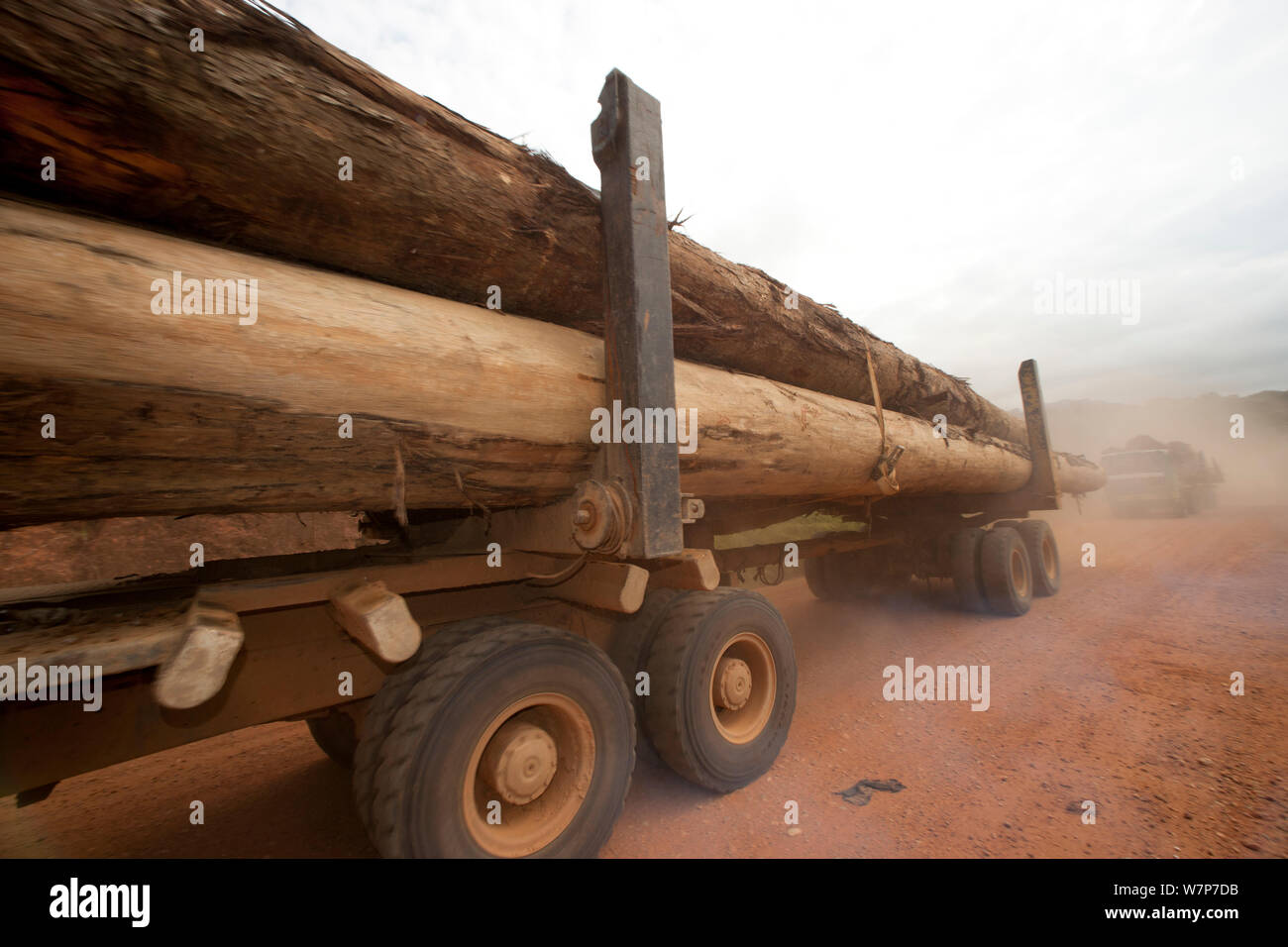 Trucks used for large-scale hardwood timber extraction with hardwood logs being taken from lumber yard located inside the Lope National Park. Onward shipment via sea takes place from Libreville, Gabon. 2009 Stock Photo