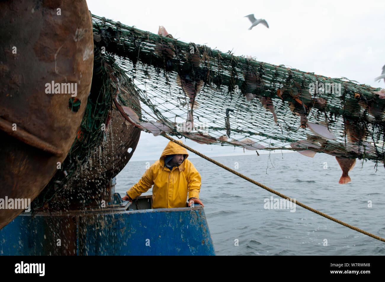 Fisherman hauling back trawler net on fishing trawler. Stellwagen Banks, New England, United States, North Atlantic Ocean Model released. Stock Photo