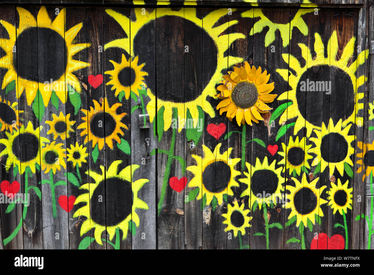 Sunflowers painted on  barn wall,  along State Highway, Bat Cave, Henderson County. North Carolina, USA, October 2013. Stock Photo