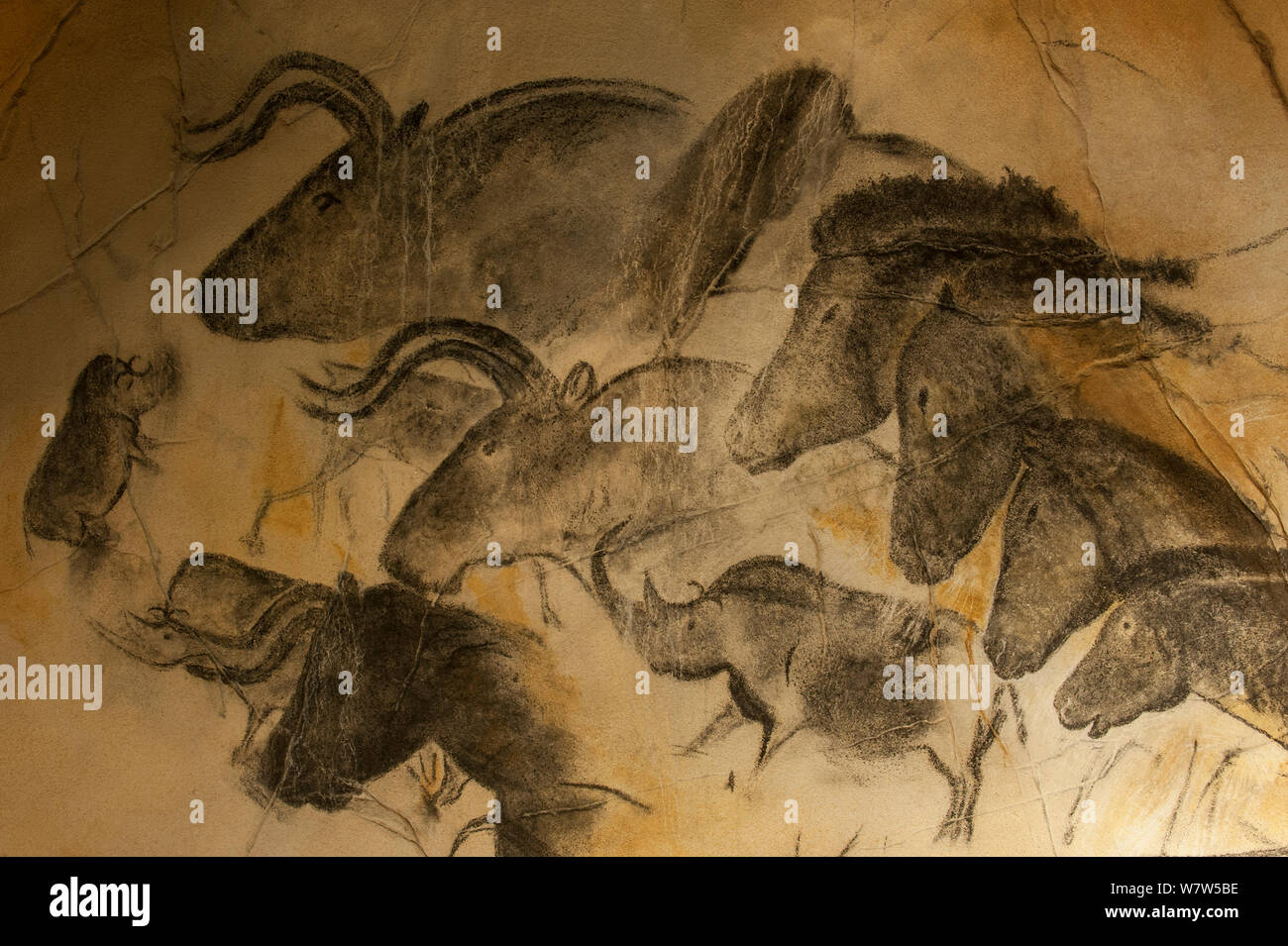 Replica Of Prehistoric Rock Paintings In Chauvet Cave Showing Woolly Rhinoceros Coelodonta Antiquitatis Wild Horses Equus Ferus And Auroch Bulls Bos Primigenius Chauvet Pont D Arc Cave Ardeche France Stock Photo Alamy