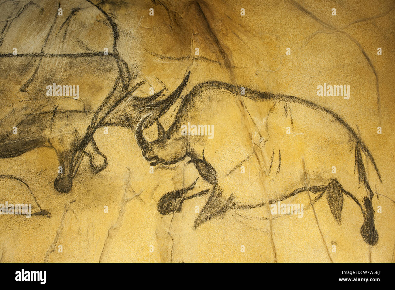 Chauvet Cave High Resolution Stock Photography And Images Alamy