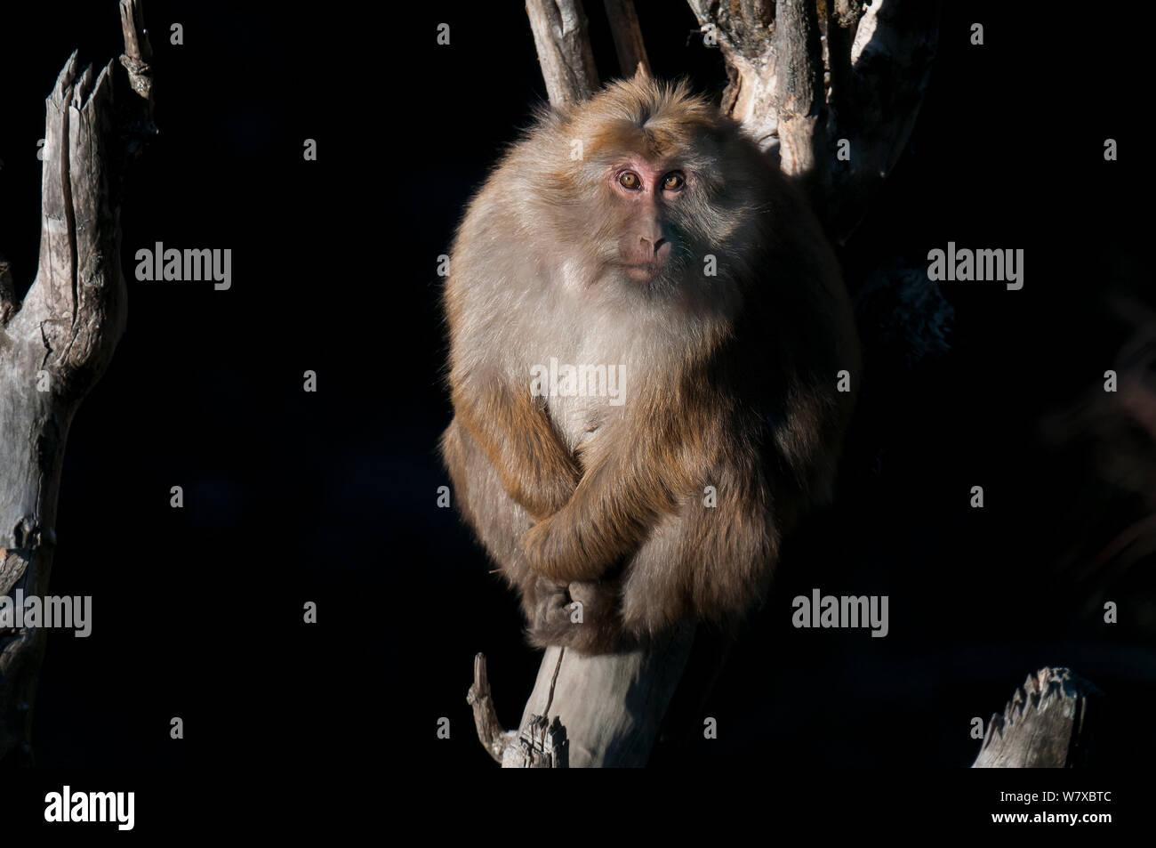 Assamese Stock Photos & Assamese Stock Images - Alamy