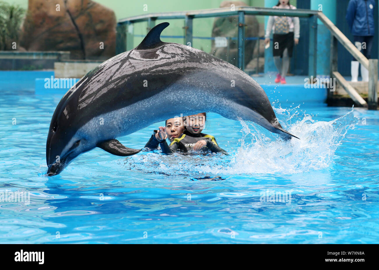 Chinese autistic girl Chenchen interacts with a dolphin under the help of a trainer at Chengdu Haichang Polar Ocean Park in Chengdu city, southwest Ch Stock Photo