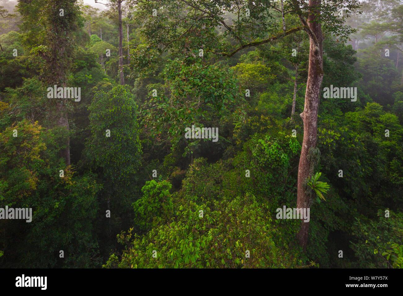 Lowland dipterocarp rainforest canopy. Danum Valley, Sabah, Borneo, May 2011. Stock Photo