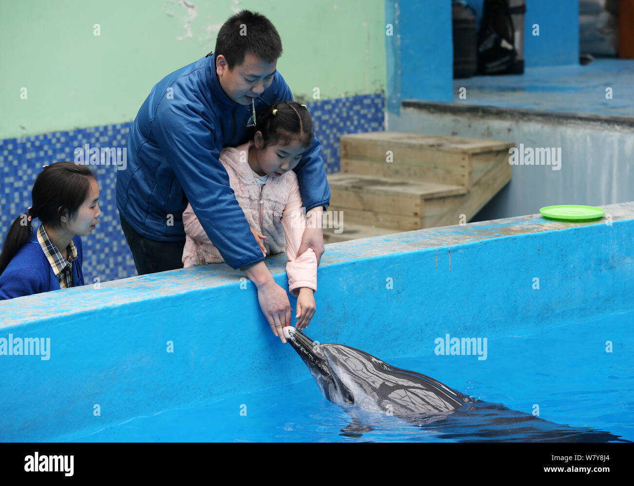 Chinese autistic girl Chenchen interacts with a dolphin under the help of her parents at Chengdu Haichang Polar Ocean Park in Chengdu city, southwest Stock Photo