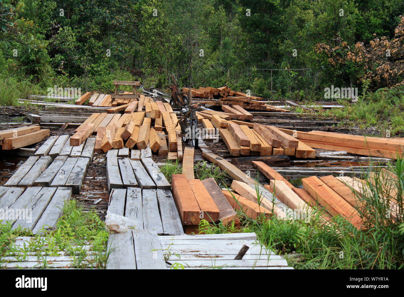 Timber from area of deforested land, area deforested for rubber tapping. Central Kalimantan,  Indonesian Borneo. June 2010. Stock Photo