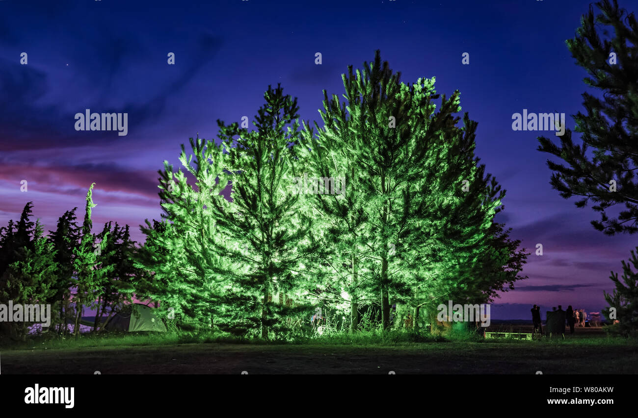 Evergreen trees lit up at festival Stock Photo