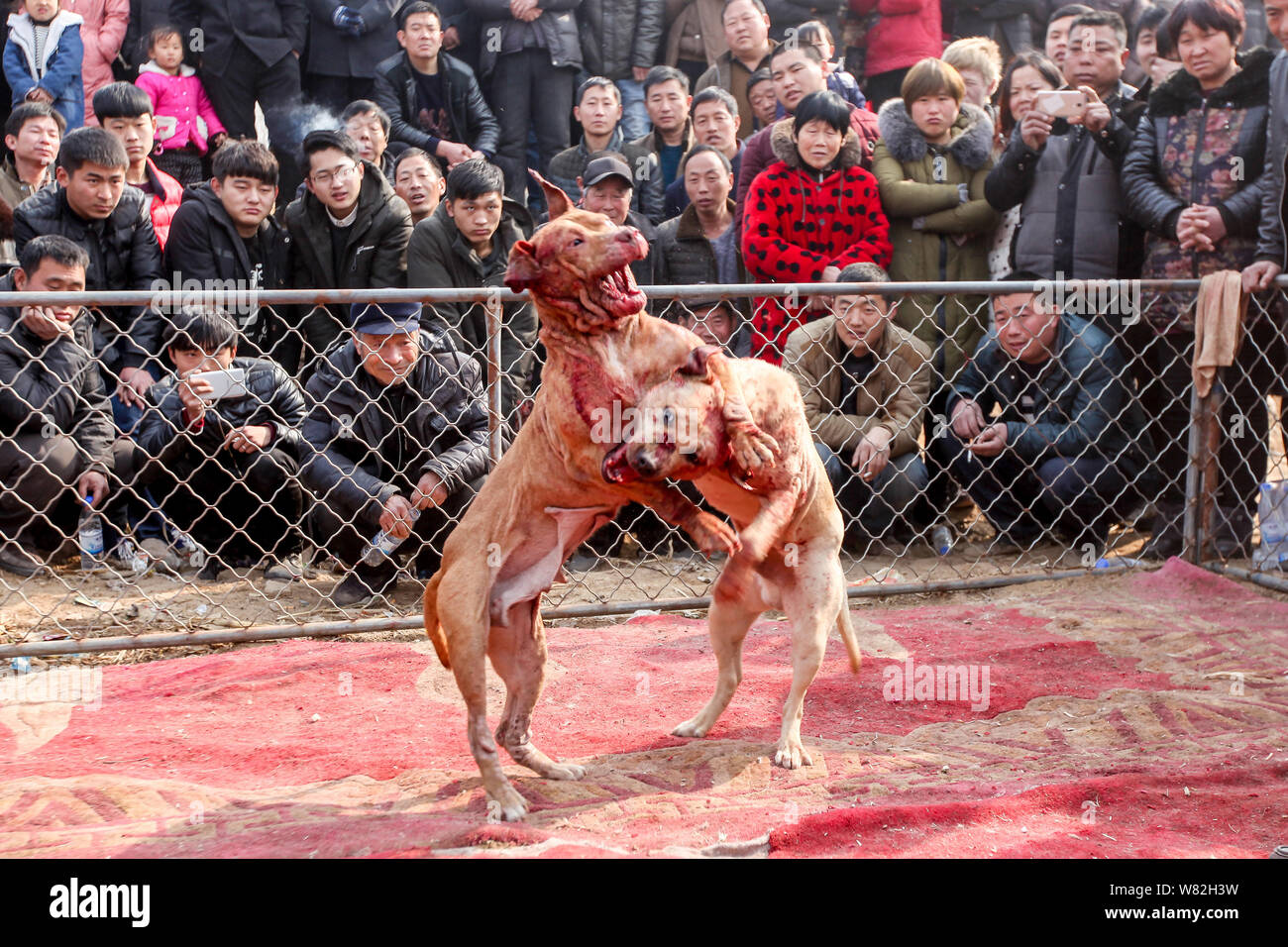 Dog Fight Stock Photos & Dog Fight Stock Images - Page 2 - Alamy