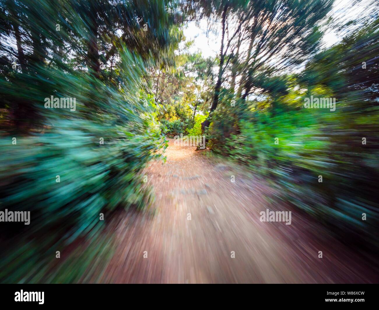 Green forest countryside path pathway natural environment speeding through dense trees Stock Photo