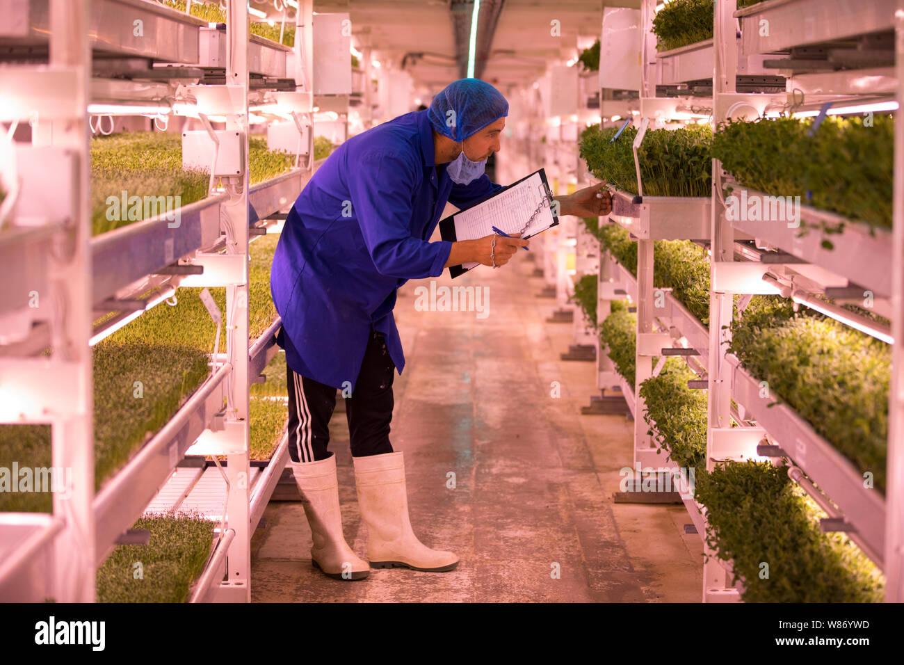 Growing Underground's vertical farm 100 feet below ground in Clapham, south London, built in former air raid shelters, England, United Kingdom Stock Photo