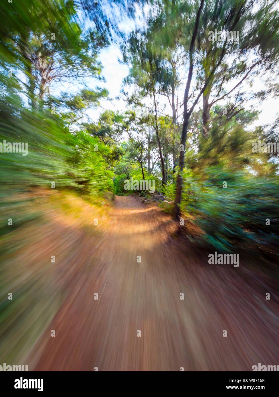 Green forest countryside path pathway speeding through dense trees natural environment Stock Photo