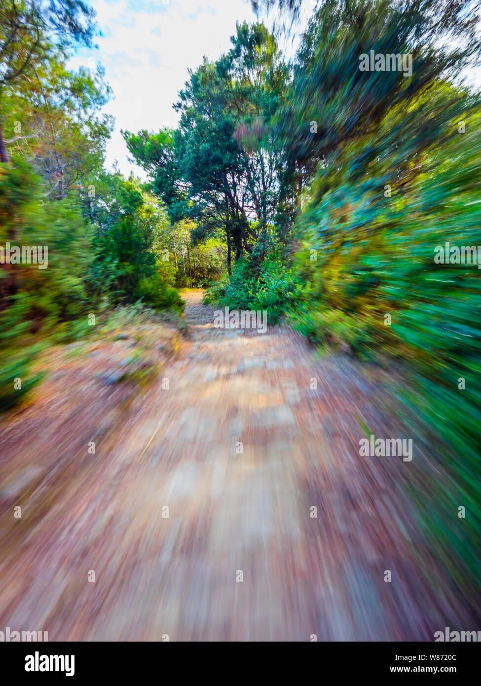 Green forest countryside path pathway speeding through dense trees Stock Photo