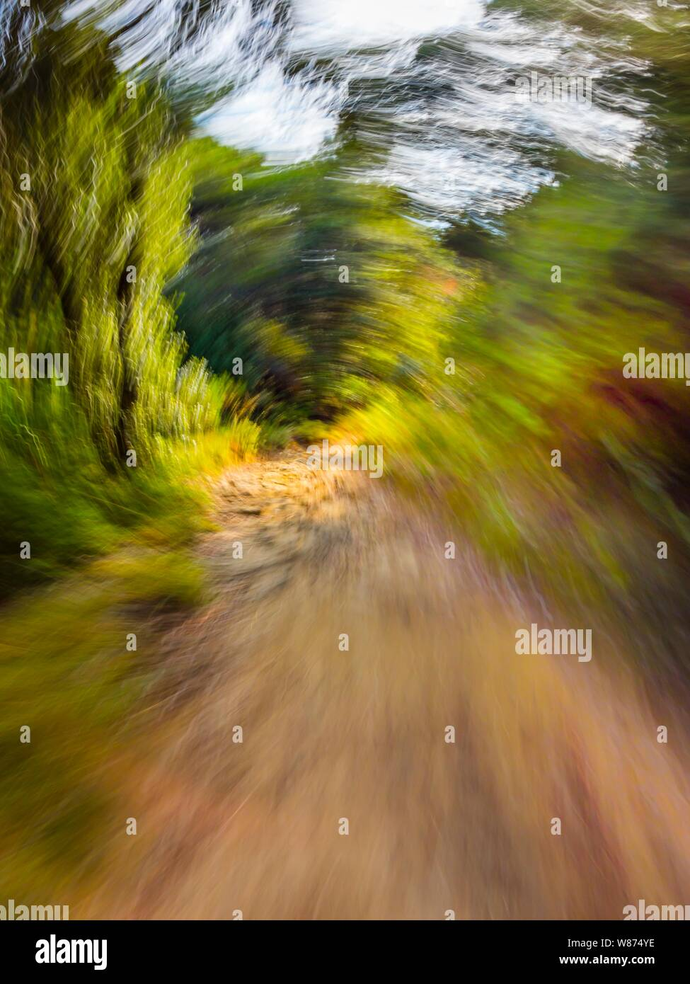 Green forest countryside path pathway speeding throught dense trees circular twirl motion dangerous risky offroad off-road Stock Photo
