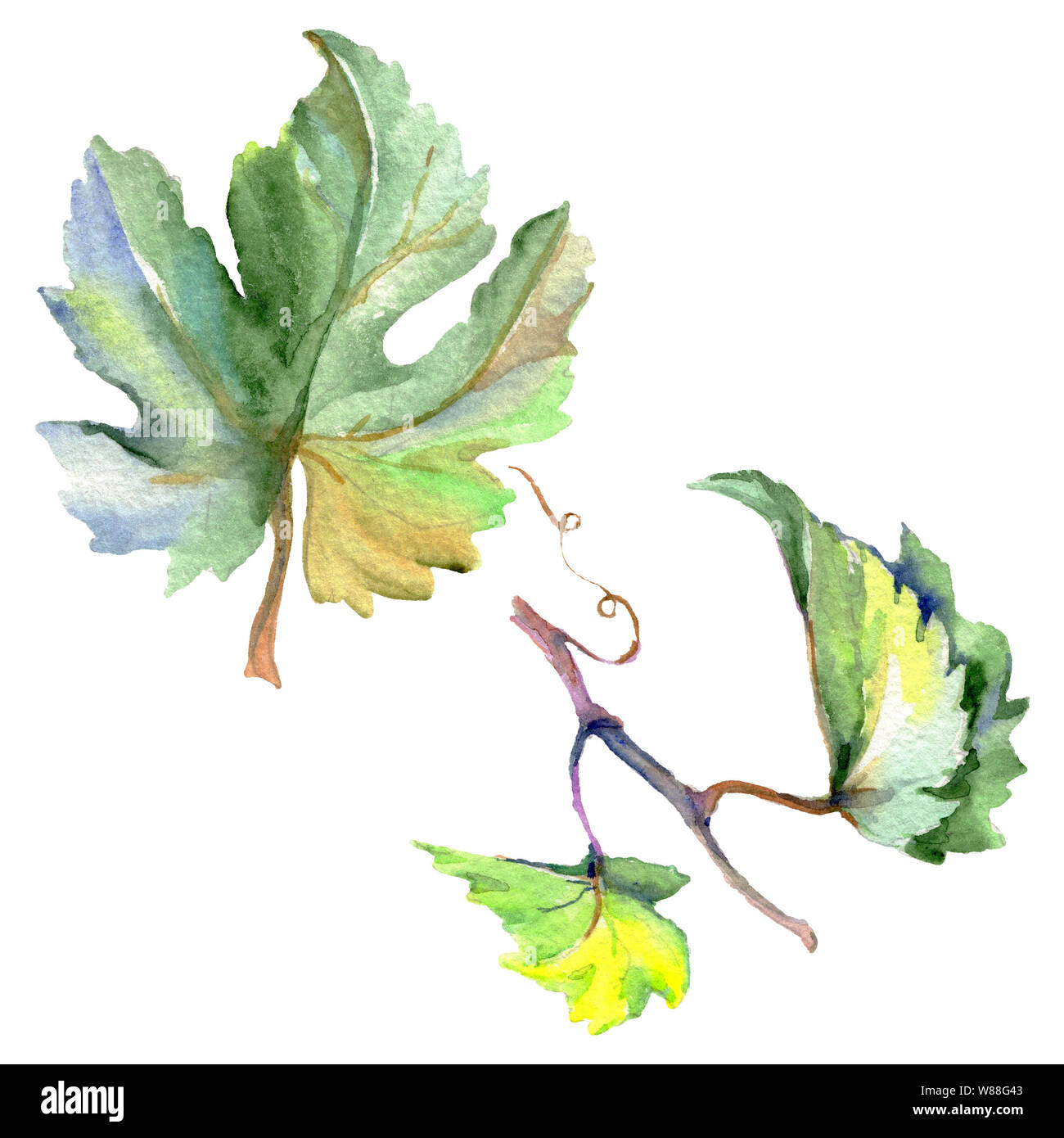 Branch Of Green Vine Leaves Watercolor Background Illustration Set Isolated Grape Illustration Element Stock Photo Alamy