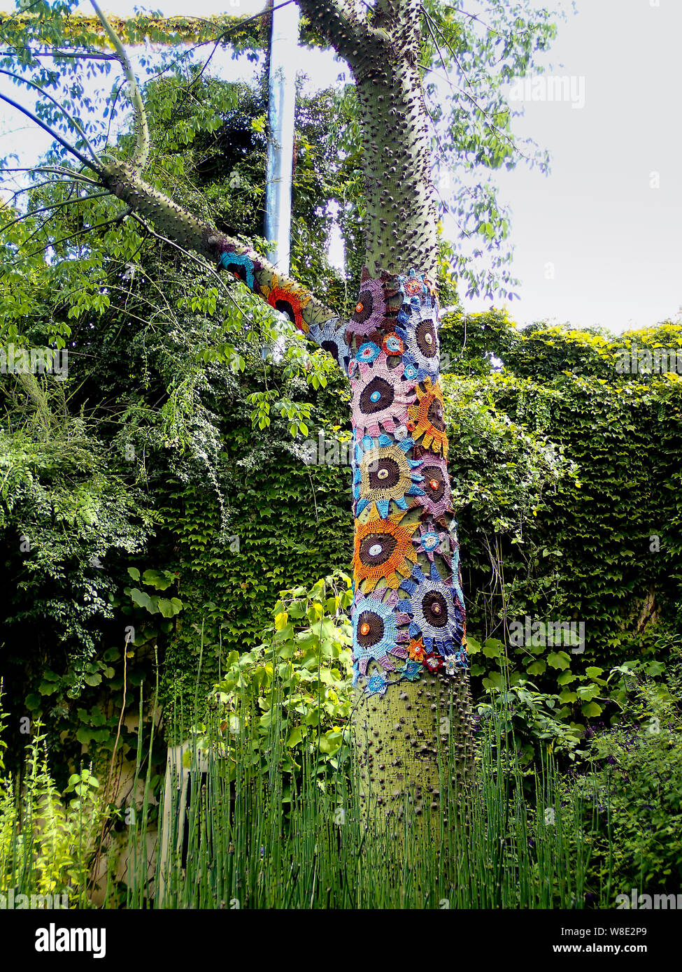 ENGLISH OAK TREE WHITE /& BLUE SCARF WRAP GIFT TREES GARDEN  COUNTRY PRESENT WRAP