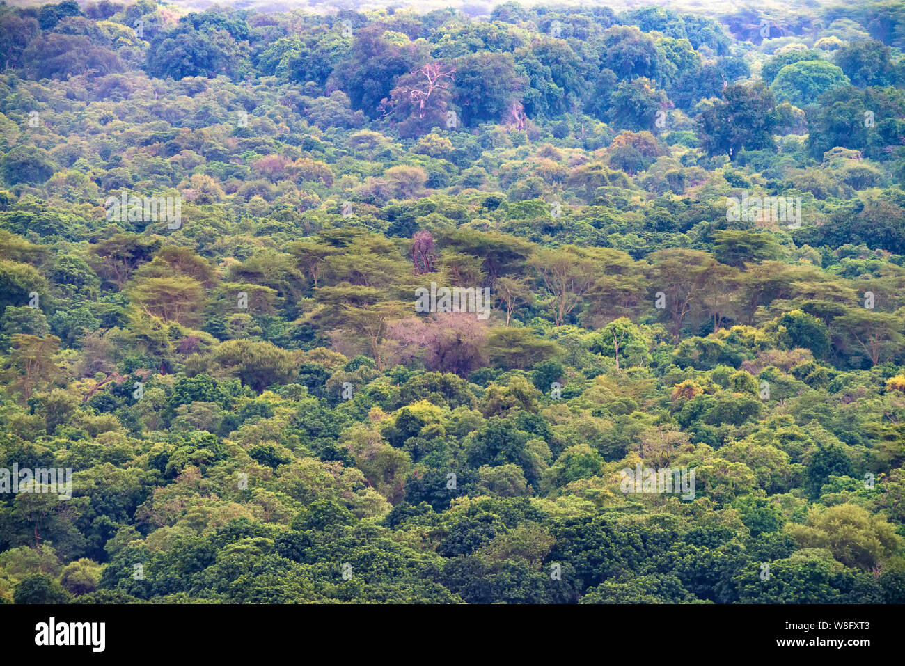 View of lush jungle forest on mountains in Tanzania Stock Photo
