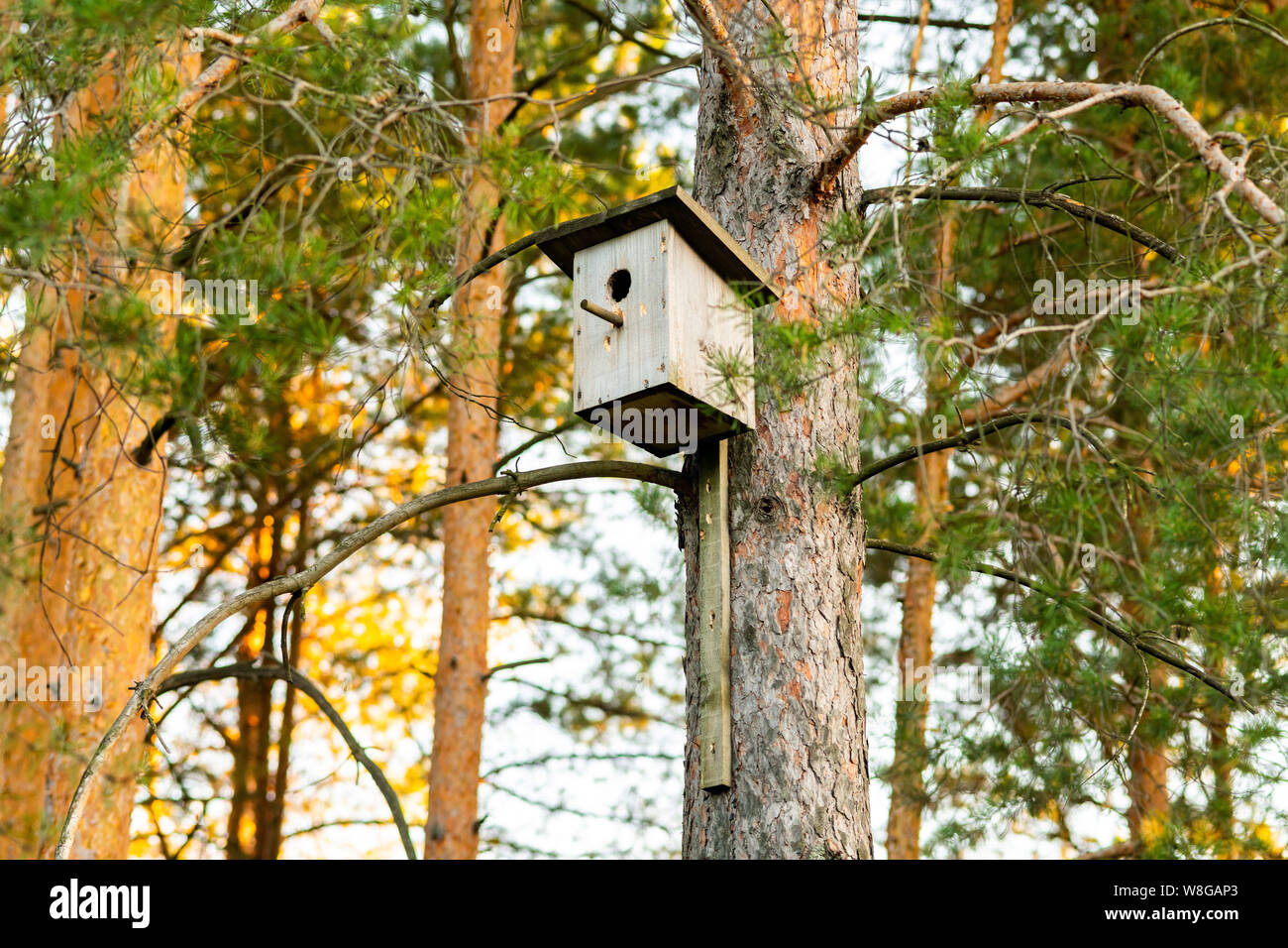 Birdhouse on a pine in the forest. Simple birdhouse design ... on modern birdhouse designs, mosaic birdhouse designs, cute birdhouse designs, exotic birdhouse designs, awesome birdhouse designs, unusual birdhouse designs, interesting birdhouse designs, whimsical birdhouse designs, ornate birdhouse designs, creative birdhouse designs,