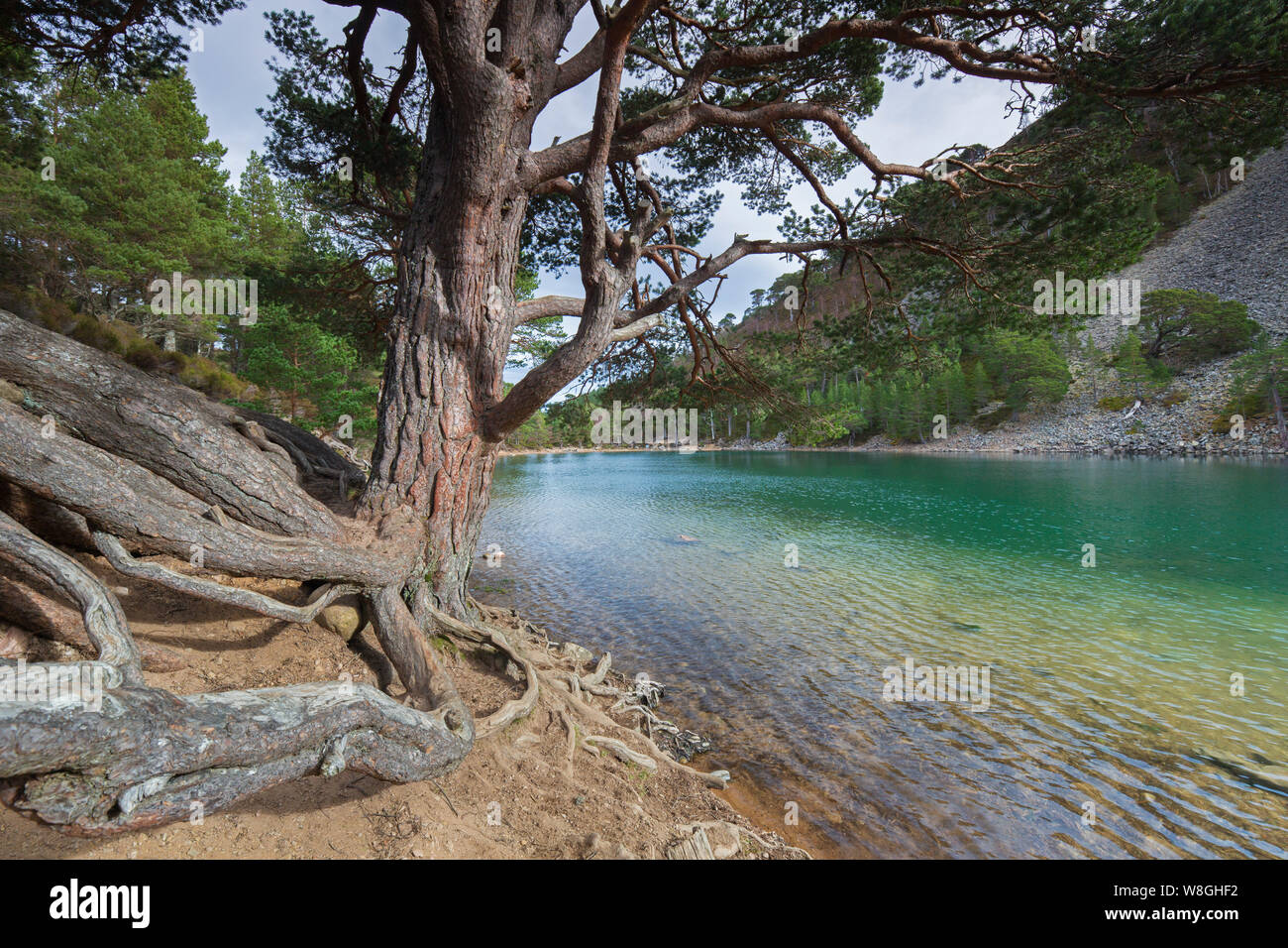 An Lochan Uaine, little loch in the Glenmore Forest Park, Cairngorms National Park near Aviemore, Badenoch and Strathspey, Scotland, UK Stock Photo