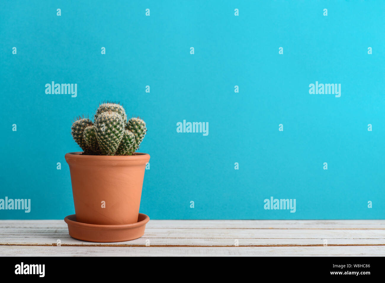 Cactus Plant In Flower Pot Potted Cactus House Plants On Blue Background Stock Photo Alamy
