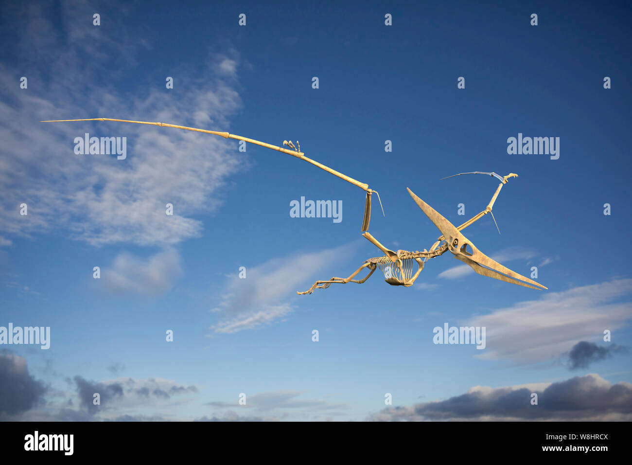 Pteranodon skeletal structure, illustration. These flying reptiles lived during the late cretaceous period, about 86-85 million years ago. Stock Photo
